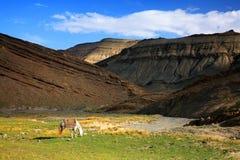 De midden Bergen van de Atlas royalty-vrije stock fotografie