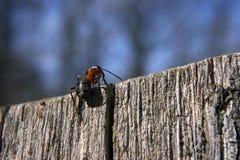 De mier gaat bedekken Royalty-vrije Stock Foto's
