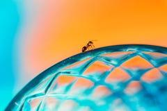 De mier loopt langs de rand van een glasbeker Stock Afbeeldingen