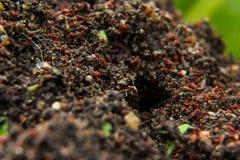 De mieren gaan naar huis Stock Afbeelding