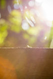 De mieren lopen op boom stock afbeeldingen