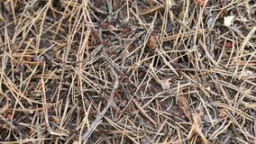 De mierenhoop met mieren sluit omhoog stock videobeelden