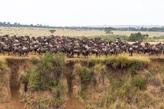 De migratie van grote kudden van meest wildebeest Afrika royalty-vrije stock fotografie
