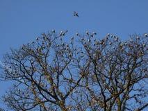De migratie van vogels Stock Afbeelding