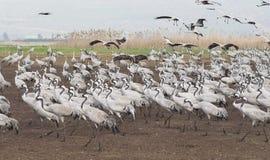 De migratie van vogels Stock Foto's