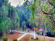 De Milieuachtergrond met een weg Stock Foto's