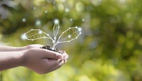 Is de milieubescherming van de aardedag in de handen van een boom die als grafisch met bruine grond wordt geplant Groene achtergr stock fotografie