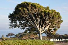 De Militaire Begraafplaats van Verenigde Staten in San Diego, Californië stock foto
