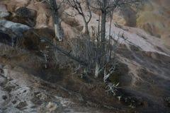De mineraal Bevlekte Mammoet Hete Lentes van Travertijncliff formations trees detail in Stock Afbeelding