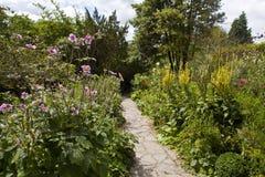 De miskelk tuiniert goed in Glastonbury. Royalty-vrije Stock Foto's