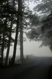 In de Mist stock foto's