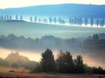 De mist Boheems bos van de ochtend royalty-vrije stock afbeeldingen