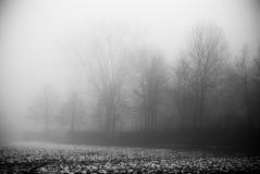 De mist en het donkere bos Royalty-vrije Stock Fotografie