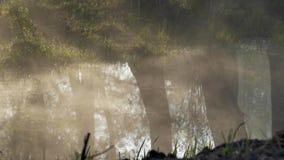 De mist kruipt langs het water Bezinningen van Bomen stock videobeelden
