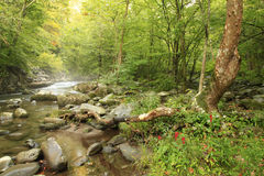 De mist regelt op de Rivier in Groot Smokey Mountains National P Royalty-vrije Stock Foto