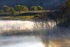 De mist Riet met regendruppels Royalty-vrije Stock Afbeeldingen