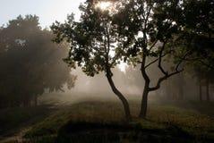 De mist Riet met regendruppels Stock Foto's