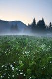 De mist van de avond over een bloemrijk weiland Stock Fotografie