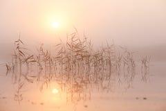 De mist van de de zomerochtend op meer Royalty-vrije Stock Afbeelding