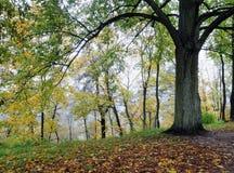 De mist van de herfst in bos Stock Afbeelding