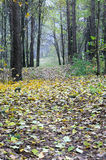 De mist van de herfst in bos Stock Fotografie
