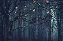 De mist van de herfst Vroege ochtend Royalty-vrije Stock Afbeeldingen