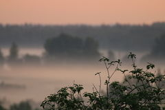De mist van de ochtend Royalty-vrije Stock Afbeelding