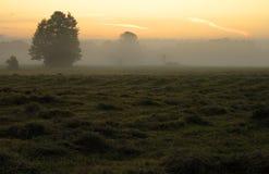 De Mist van de ochtend Stock Afbeeldingen