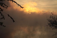 De mist van de ochtend Stock Fotografie