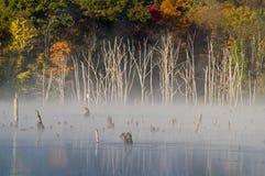 De mist van de ochtend bij Reservoir Monksville royalty-vrije stock fotografie