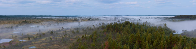 De mist van de ochtend in een moeras stock afbeelding