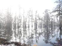 De Mist van de ochtend in het moeras Stock Afbeeldingen