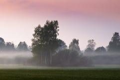 De mist van de ochtend op open gebied Stock Fotografie