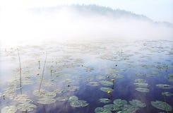 De mist van de ochtend op wild bosmeer in Karelië Stock Afbeelding