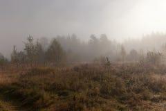 De mist van de ochtend op zonsopgang bij hout. Het landschap van de herfst Royalty-vrije Stock Foto