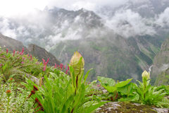 De Mist van de Wildflowersbergweide Stock Afbeelding