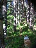 In de mist van een bos Stock Afbeelding