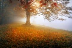 De mistige dag van de de herfstochtend royalty-vrije stock foto's