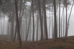 De mistige de pijnboombomen en sneeuw in de winter leggen dichtbij zeist in Ne vast Stock Fotografie
