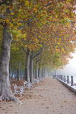 De mistige herfst royalty-vrije stock afbeelding