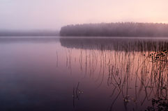 De mistige, houten meerherfst, in de stille ochtend Stock Fotografie
