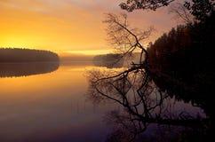 De mistige, houten meerherfst, in de stille ochtend Royalty-vrije Stock Foto's
