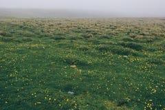 De mistige weide van de de zomerochtend en kleine bloemen in de bergen Bucegi Roemenië, Europa Karpatisch, de Oekraïne, Europa royalty-vrije stock fotografie