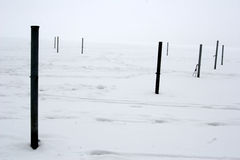 De mistige winter Stock Fotografie