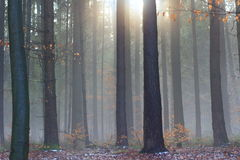 De mistige winter bosachtergrond Stock Fotografie