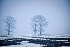 De mistige winter van het weidelandschap Stock Afbeeldingen