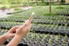 de mobiele telefoon van de handgreep in de tuin Stock Foto