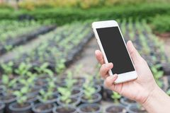 de mobiele telefoon van de handgreep in de tuin Royalty-vrije Stock Fotografie