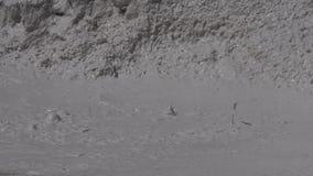 De modder ploetert in Verfpotten stock footage