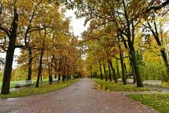 De modderweg met dalingsgebladerte en gele bomen bij het Deel van Heilige Petersburg in autumnk stock foto